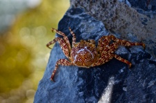 Crab on a rock