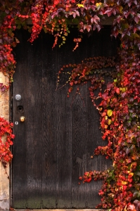 Red ivy surrounding a door