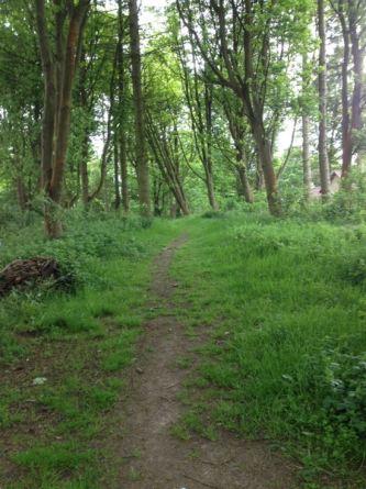 Non-intervention woodland
