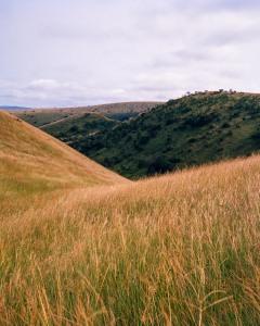 Grassland, Bateke Plateau