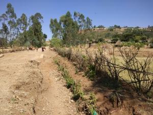 roadside-planting-este