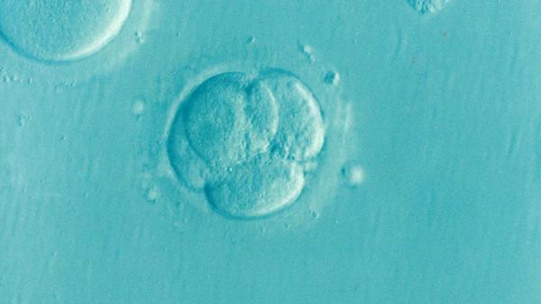 embryo-1514192_1920 pixabay 600px