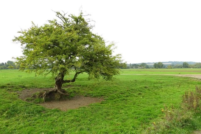 tree port meadow