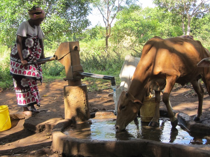 Handpump and livestock by Tim Foster.JPG